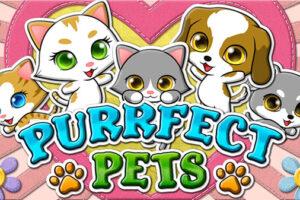 Purrfect Pets RTG Slot game